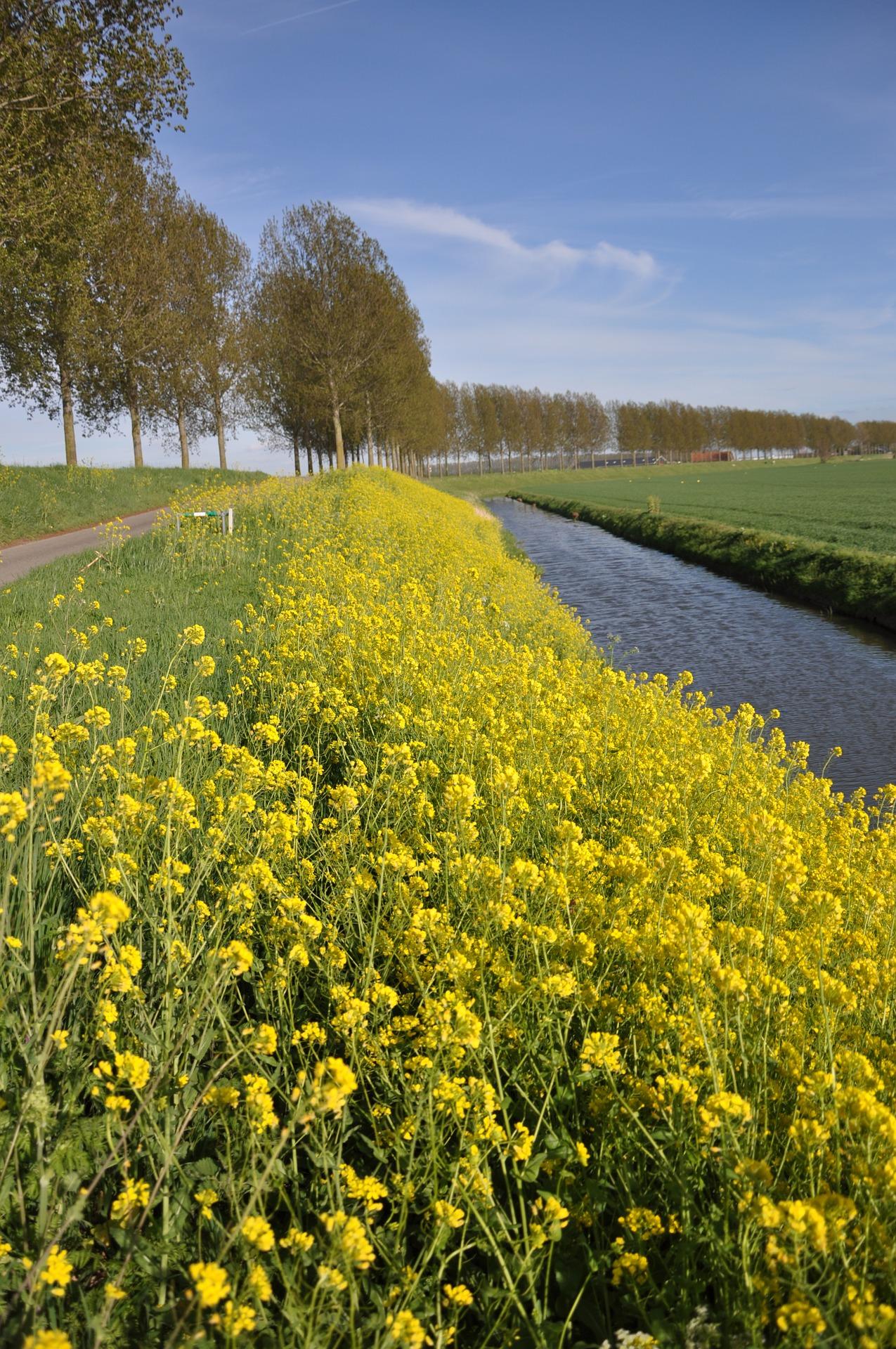 mustard-seed-2133041_1920.jpg