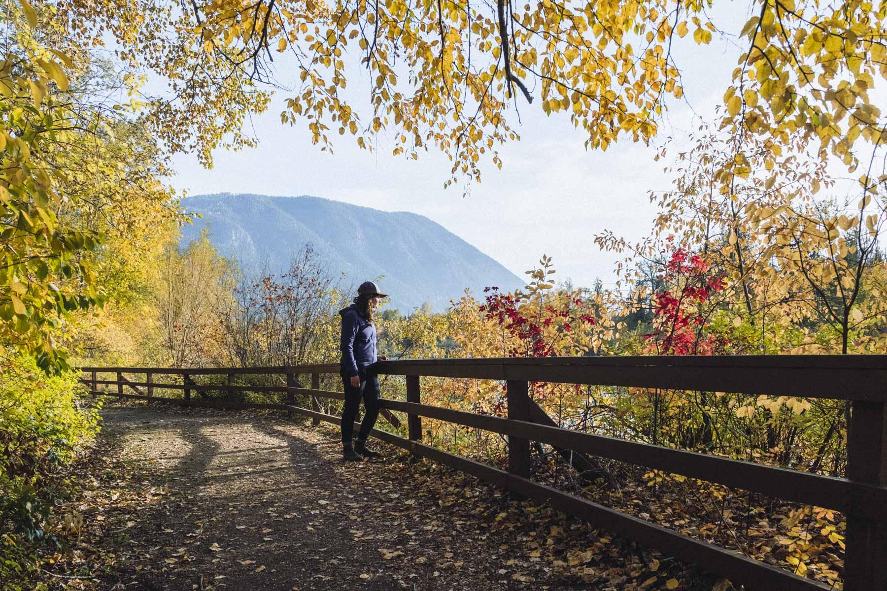 Adams River Salmon Run, Tsútswecw Provincial Park, Shuswap Photo credit: Megan McLellan & Emanuel Smedbol
