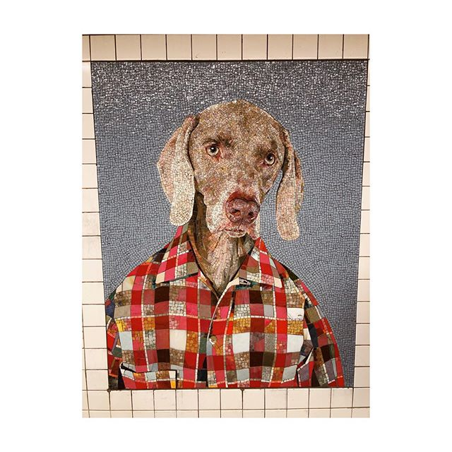 """Sooo when taking my new headshots, Jen @agrnyla said, """"Wear flannel!"""" Announcing, my new headshot. You can really see the """"warm with a secret"""" in my eyes. I put two photos of me side by side and I cannot tell the difference... #ohmydog"""