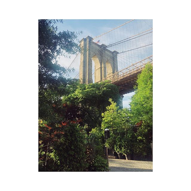Glorious days in an old home. 🌳 #TreesACrowd #BrooklynBridge #BrooklynMoveMySoulLikeThis