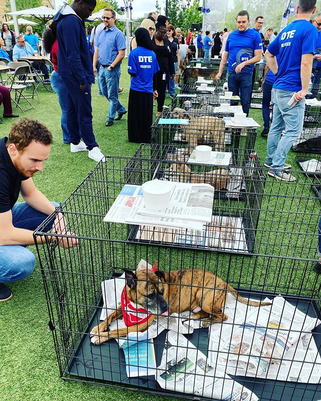 Pet adoption event at Beacon Park today sponsored by DTE. So many cute pups and kittens, did anyone find their Furrrrrever friend today?! #detroit #detroitrevival @humanesociety @beaconparkdetroit @dte_energy