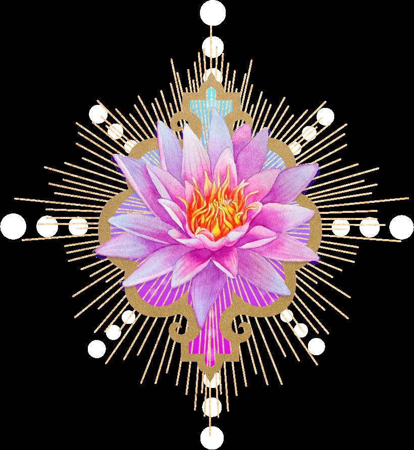 Lotus Image (1).png
