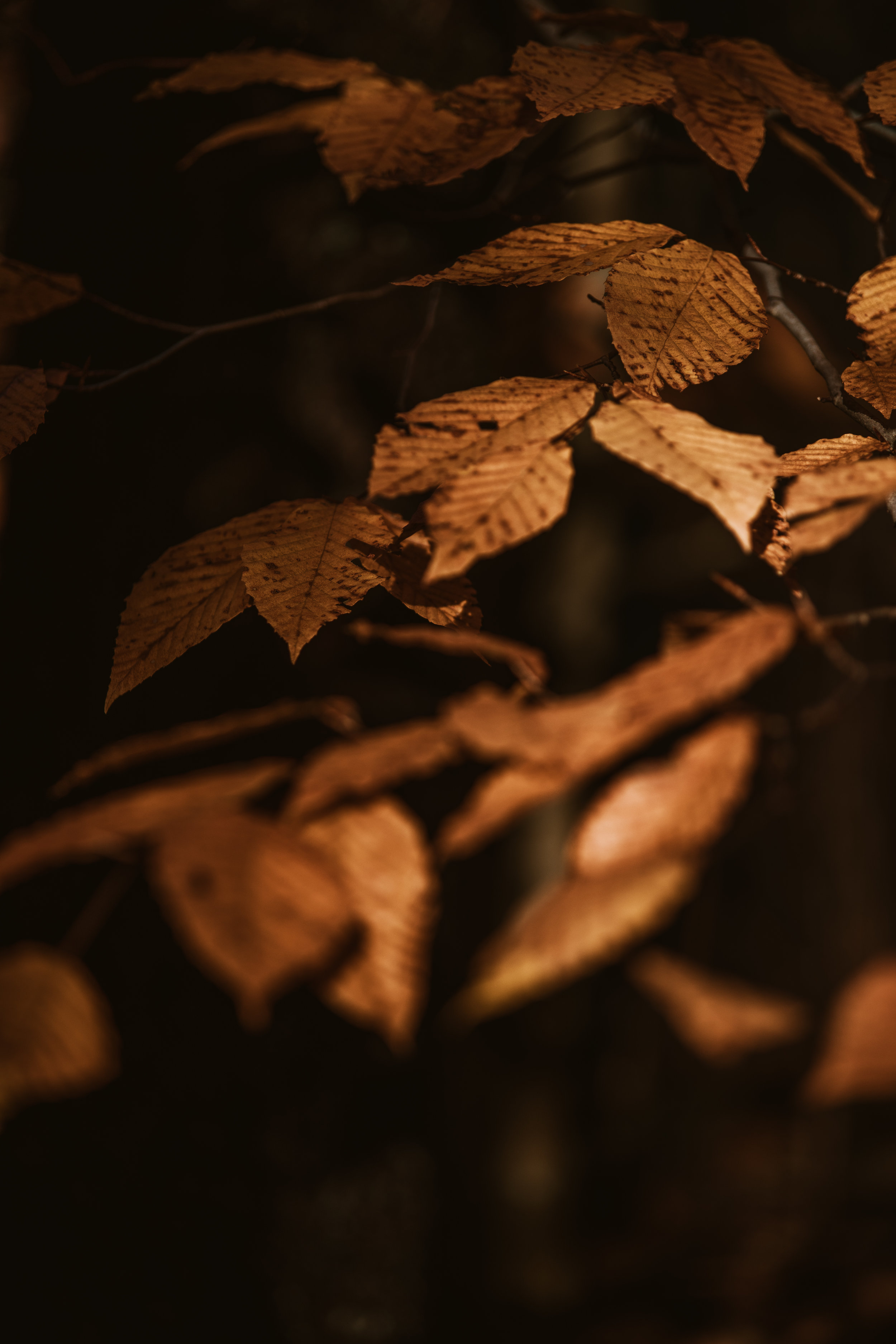 Vermont Fall-6432.jpg