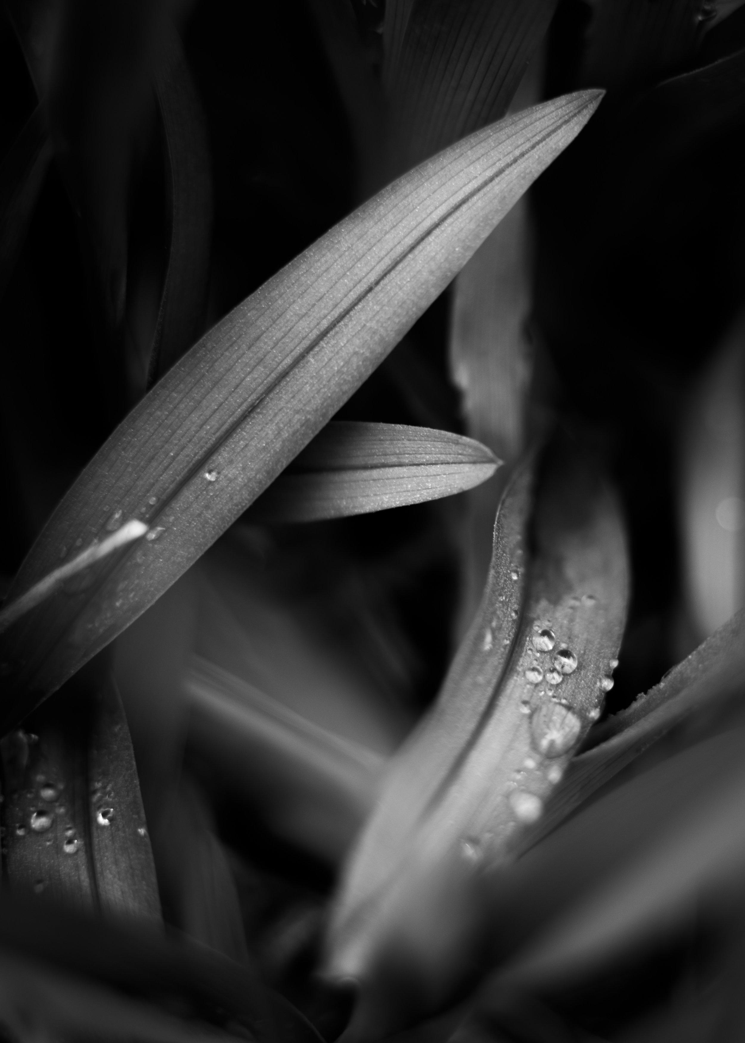 Vermont Spring Grass-2.jpg