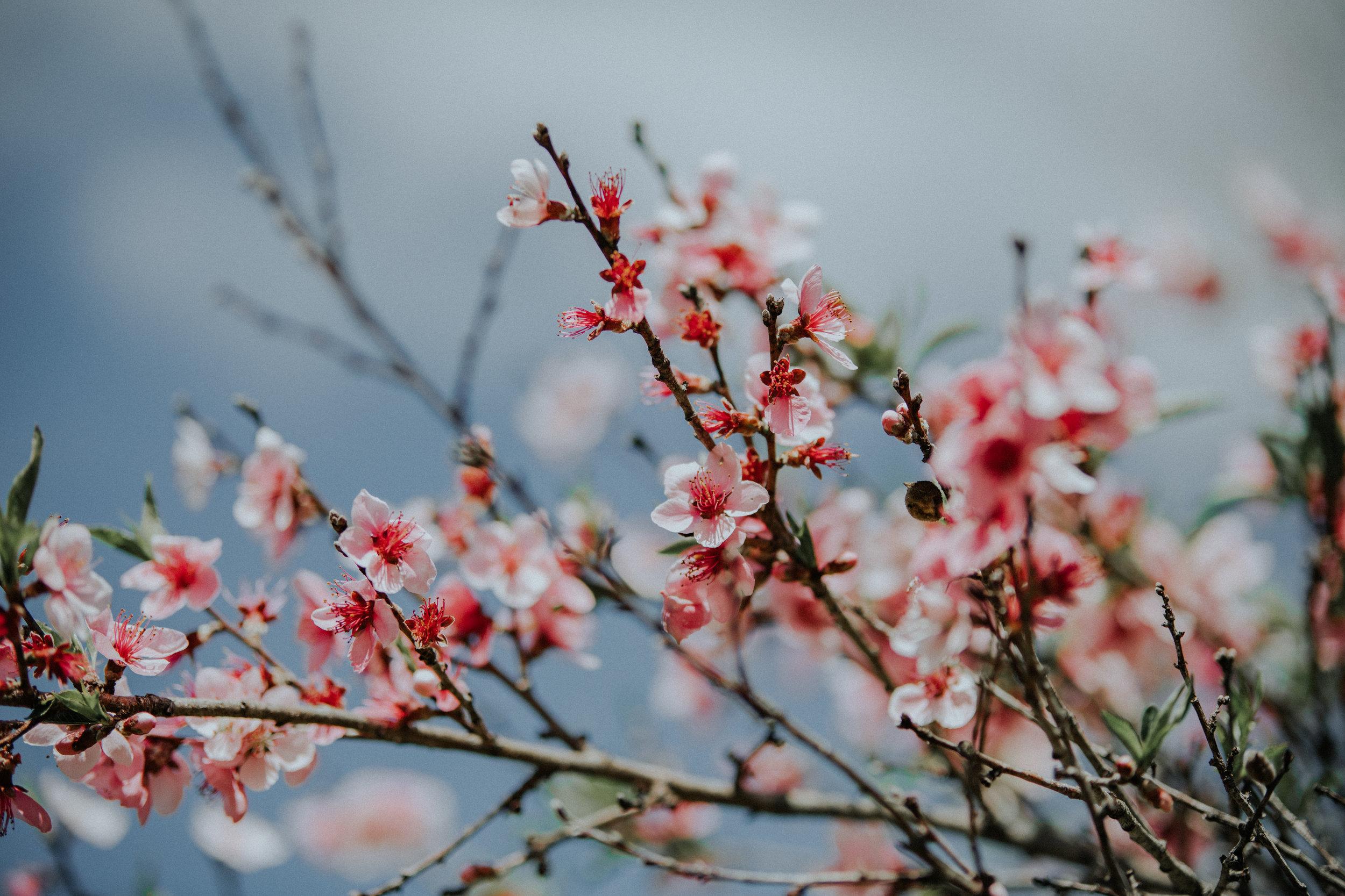 Spring-4369.jpg