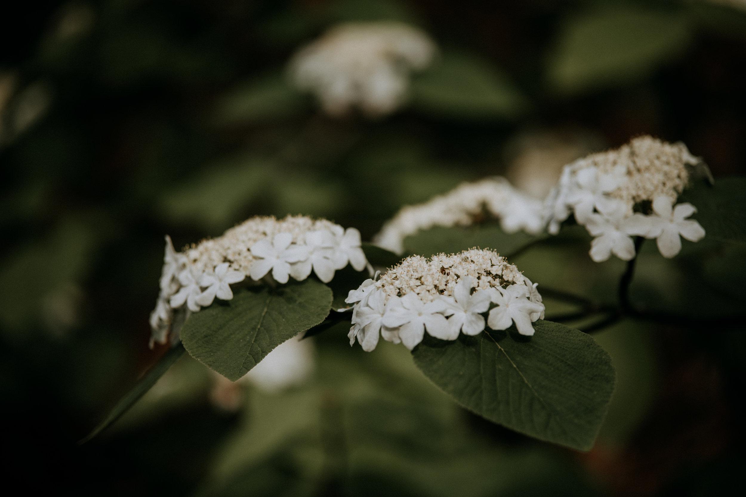 Spring-4543.jpg