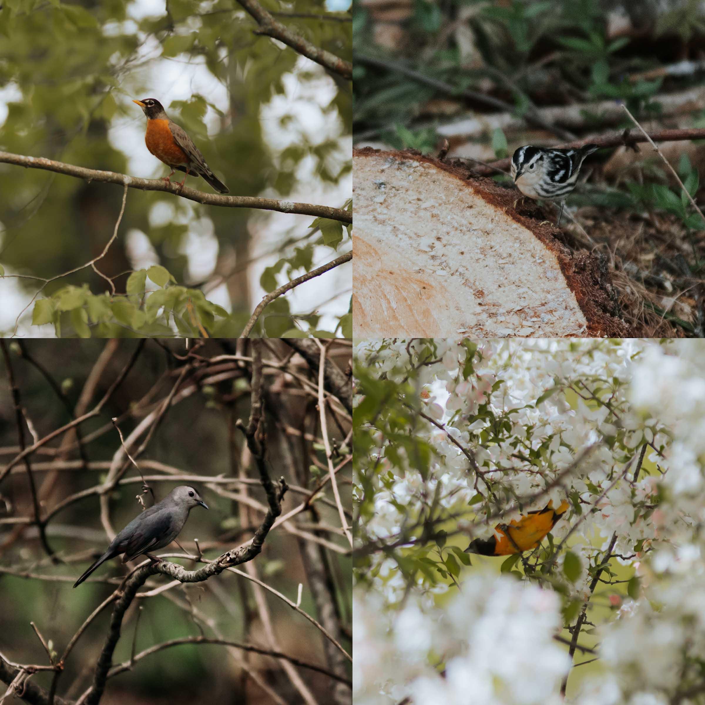 Spring Birds.jpg