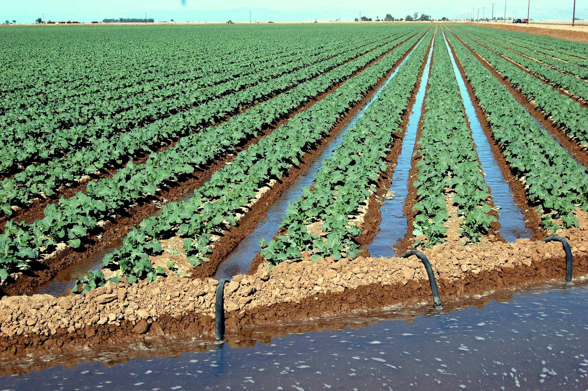 imperial irrigation district.jpg