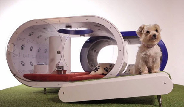 Believe it or not, this fancy doghouse by Samsung is stocked with a treadmill, a tablet (for slideshows of family pictures, perhaps, or playing videos from Animal Planet on a loop), and even a pooch-sized pool. Talk about amenities – Wow!