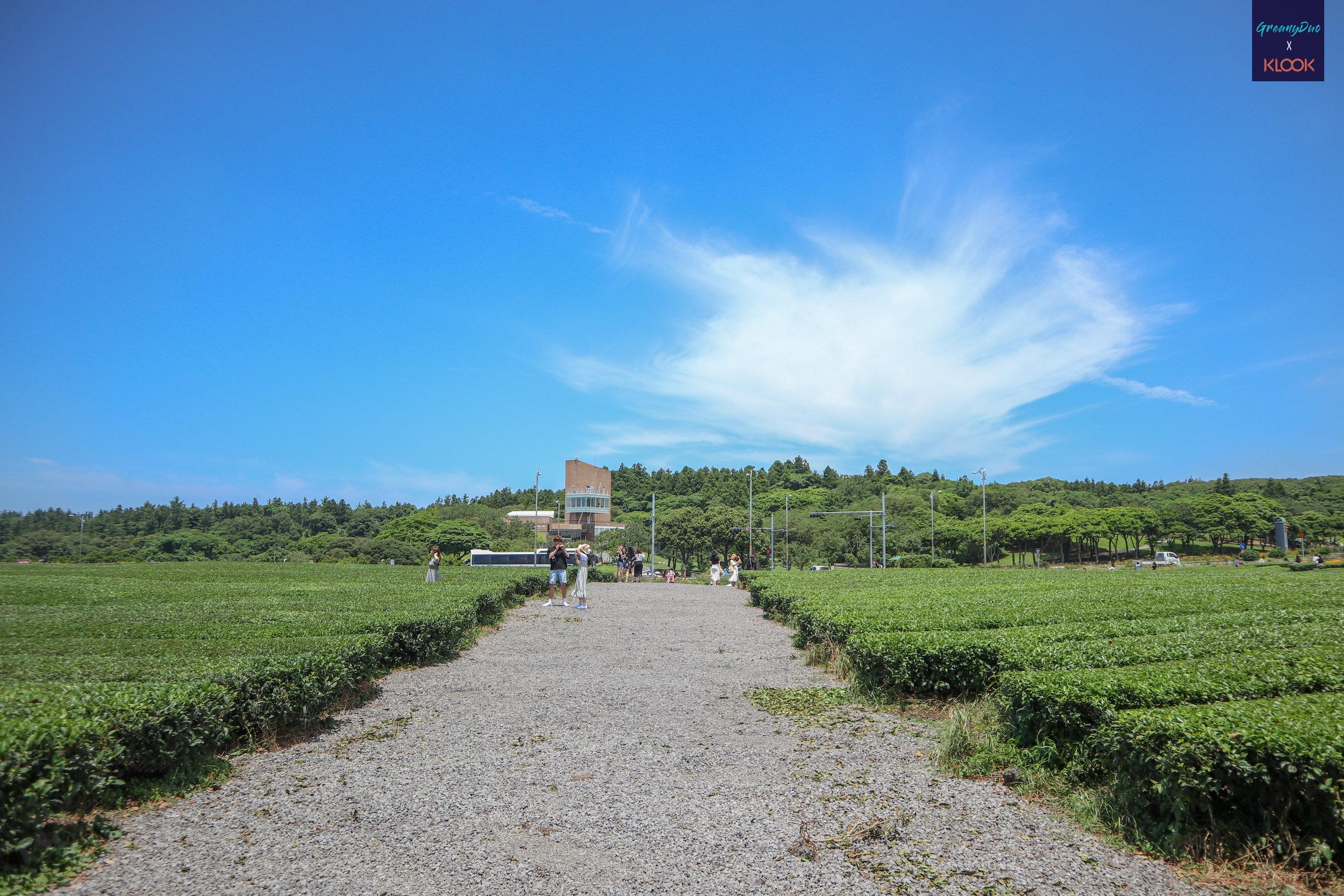 ไร่ชาเขียว O'Sulloc เกาะเชจู