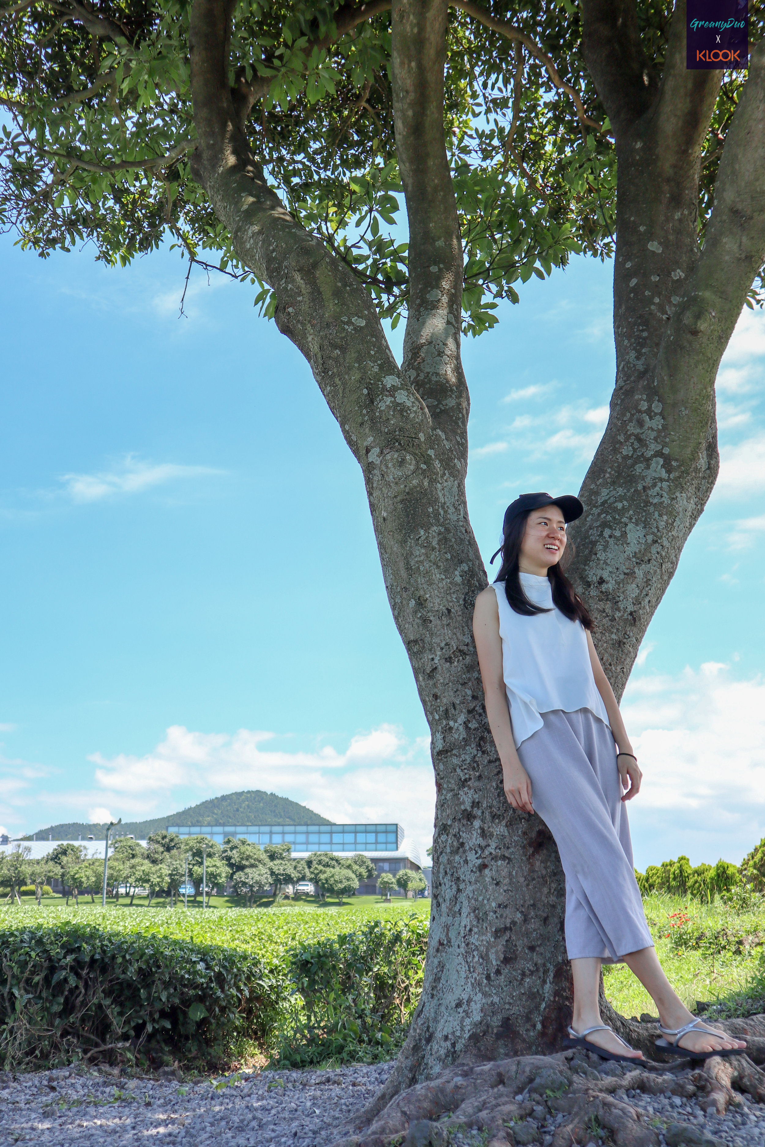 jenny taking photo with the big tree in the middle of ไร่ชาเขียว O'Sulloc เกาะเชจู