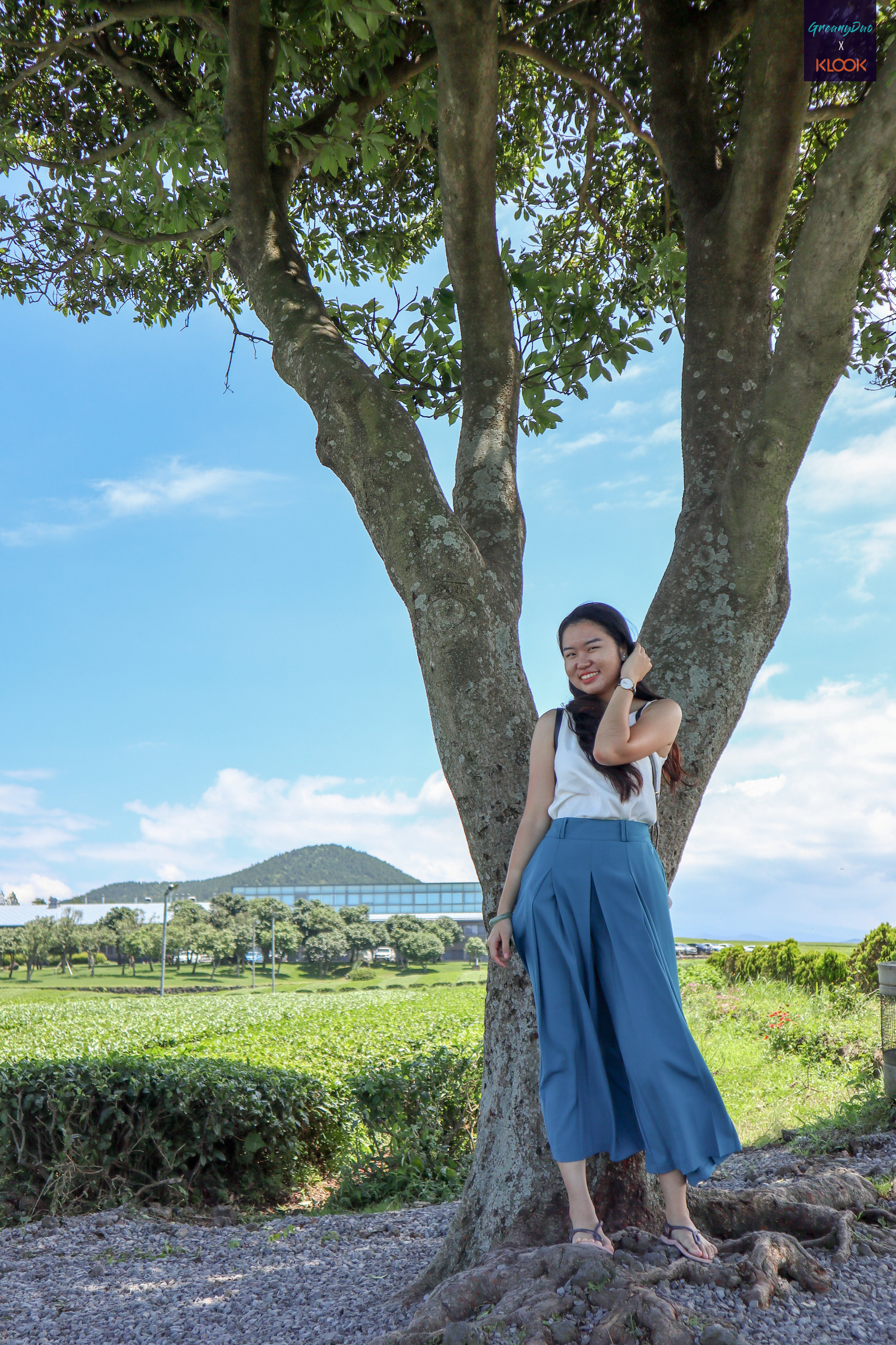 tina taking photo with the big tree in the middle of ไร่ชาเขียว O'Sulloc เกาะเชจู