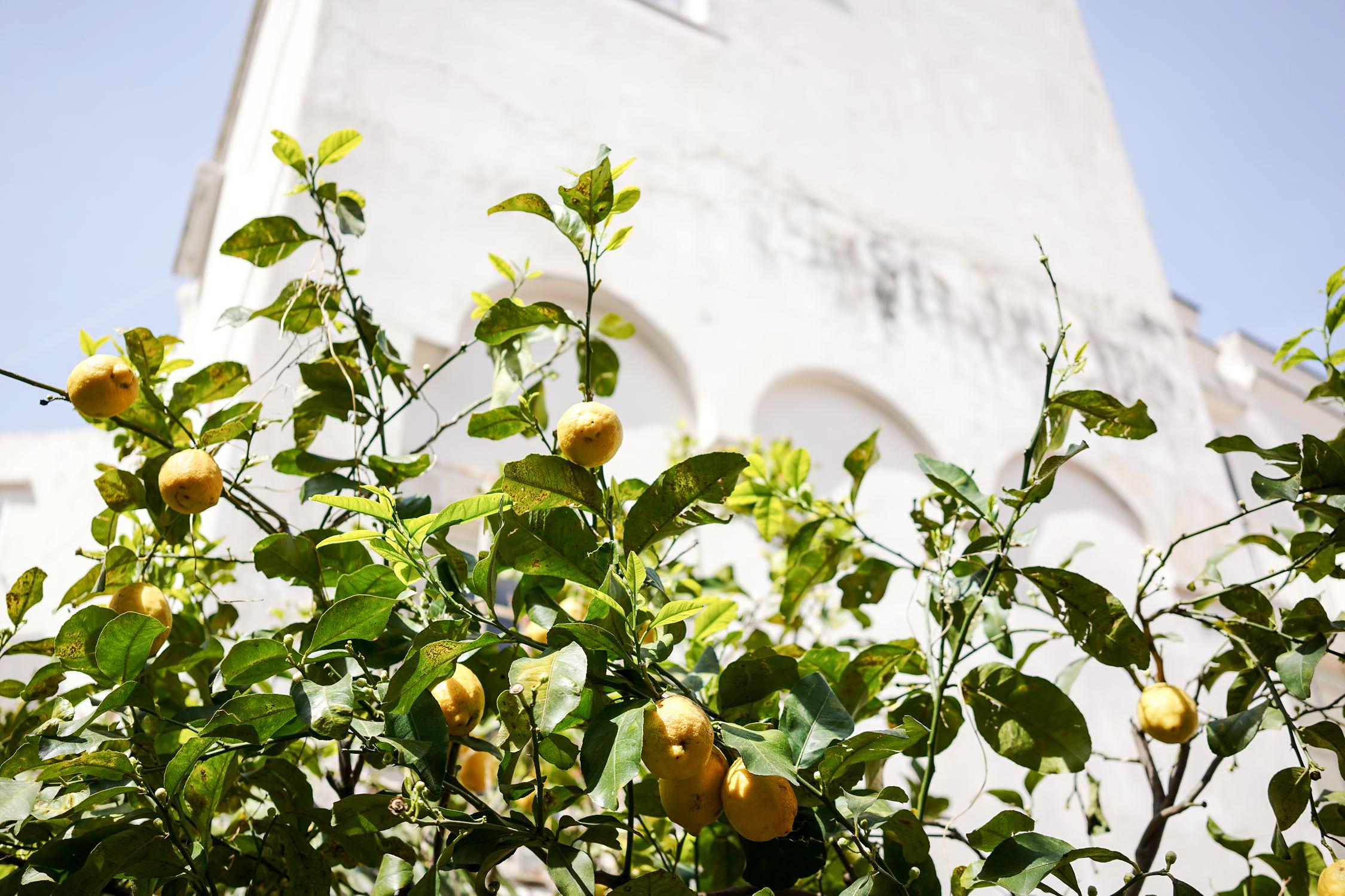 limone (1 of 1).jpg