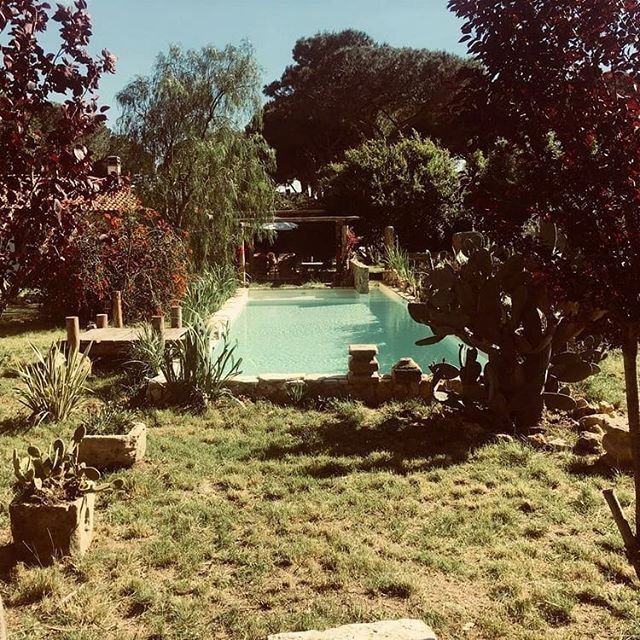 Piscina nel Verde . . . . . . #architettura #outdoor #outdoordesign #piscina #summer #giardino #design #italy #italianstyle #howwework #mezzosangue #roma #mezzosanguearchitects #swimmingpool #swimmingpooldesign #gardendesign #fontanile #maremma #followus