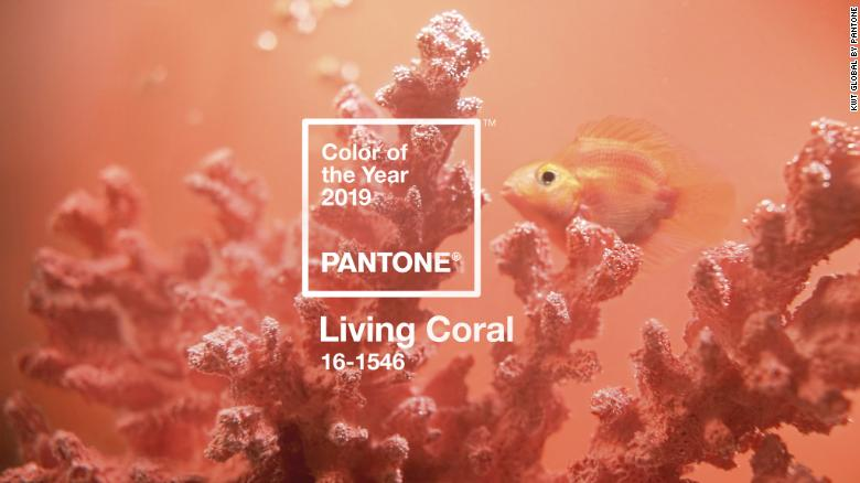 Pantone Color of the Year is Living Coral. Columbus Wedding Planner
