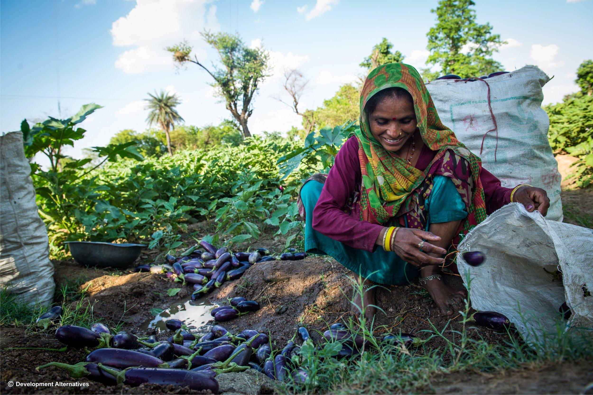 Vegetable cultivation initiatives for  women farmers.jpg