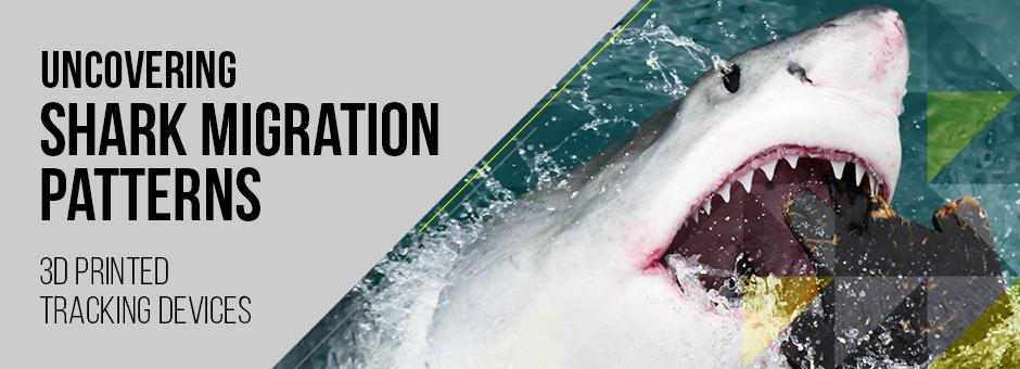 3D Printing Shark