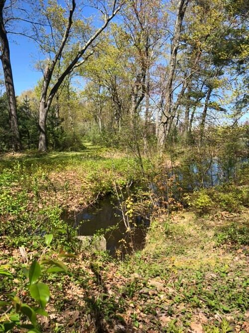 Full Forest Therapy Walk in Devens (April)