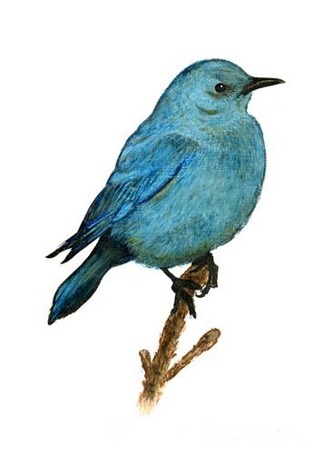 Bluebird_000.jpg