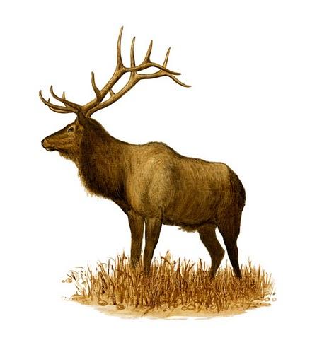Elk_001.jpg