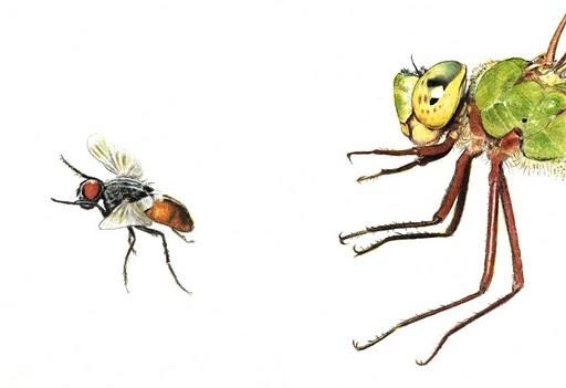 DragonflyandFly.jpg