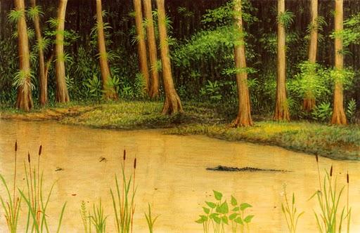 SWFloridaSwamp2.jpg