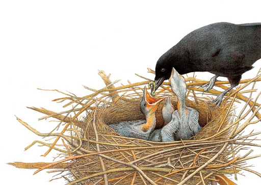 NestingCrows-detail_001.jpg