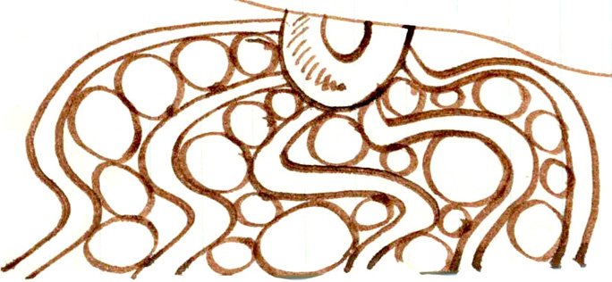 003 Octopus Eggs.jpg