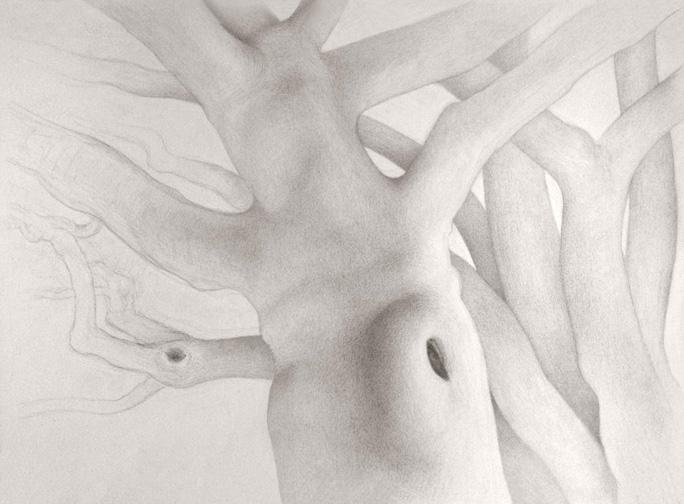 Sycamore drawing.jpg