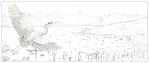 p22-23 pencil sketch with new pencil heron.jpg