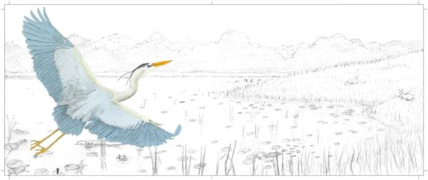 page 22-23 sketch w color heron.jpg