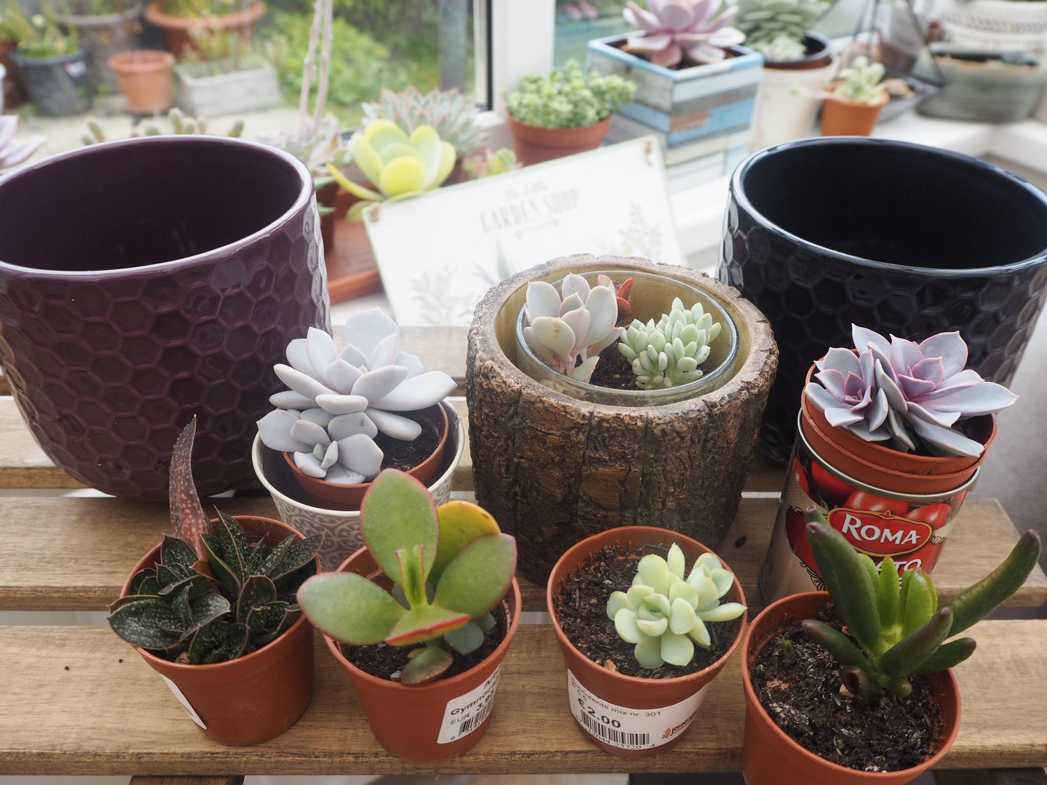 Simple Arrangement Succulents