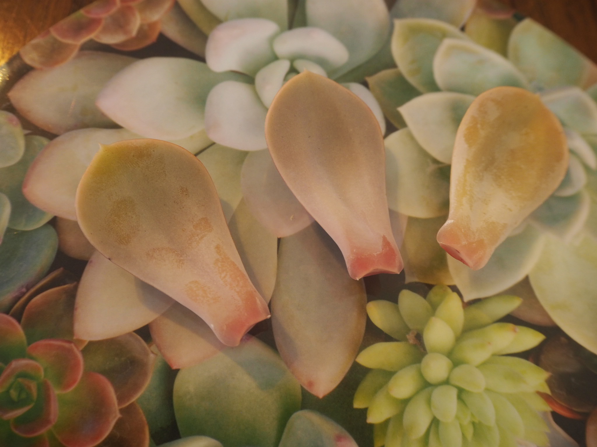 How to Propagate - 3 Leaves