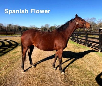 Spanish+Flower.jpg