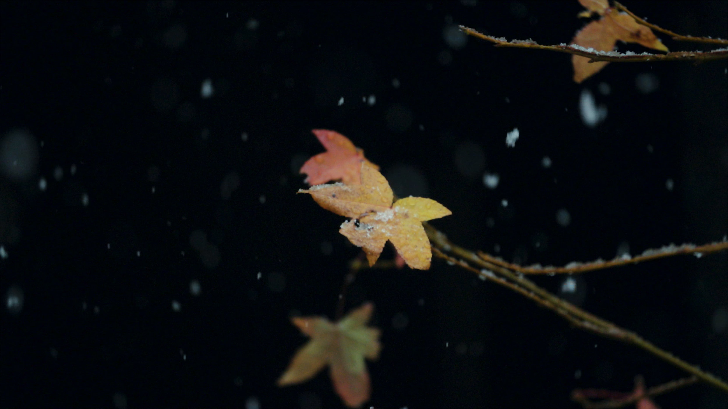 photo_9.jpg