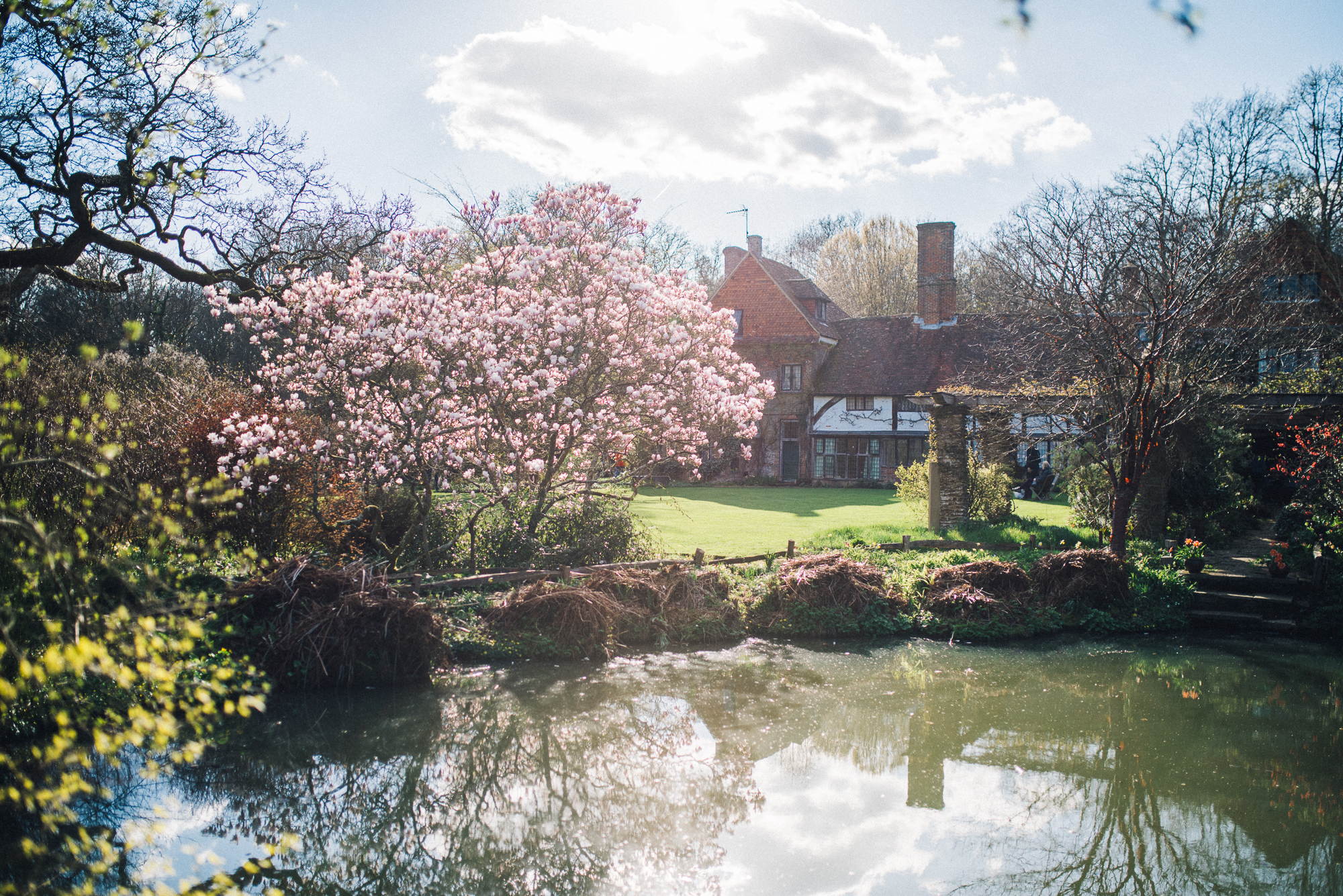 A view of the house and a spectacular magnolia across the Water Garden