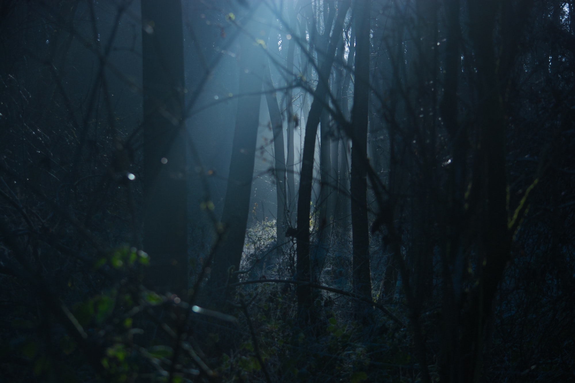 Hunted - In the wilds, hunted and alone.Driev has to get to safety, but will he make it out alive?
