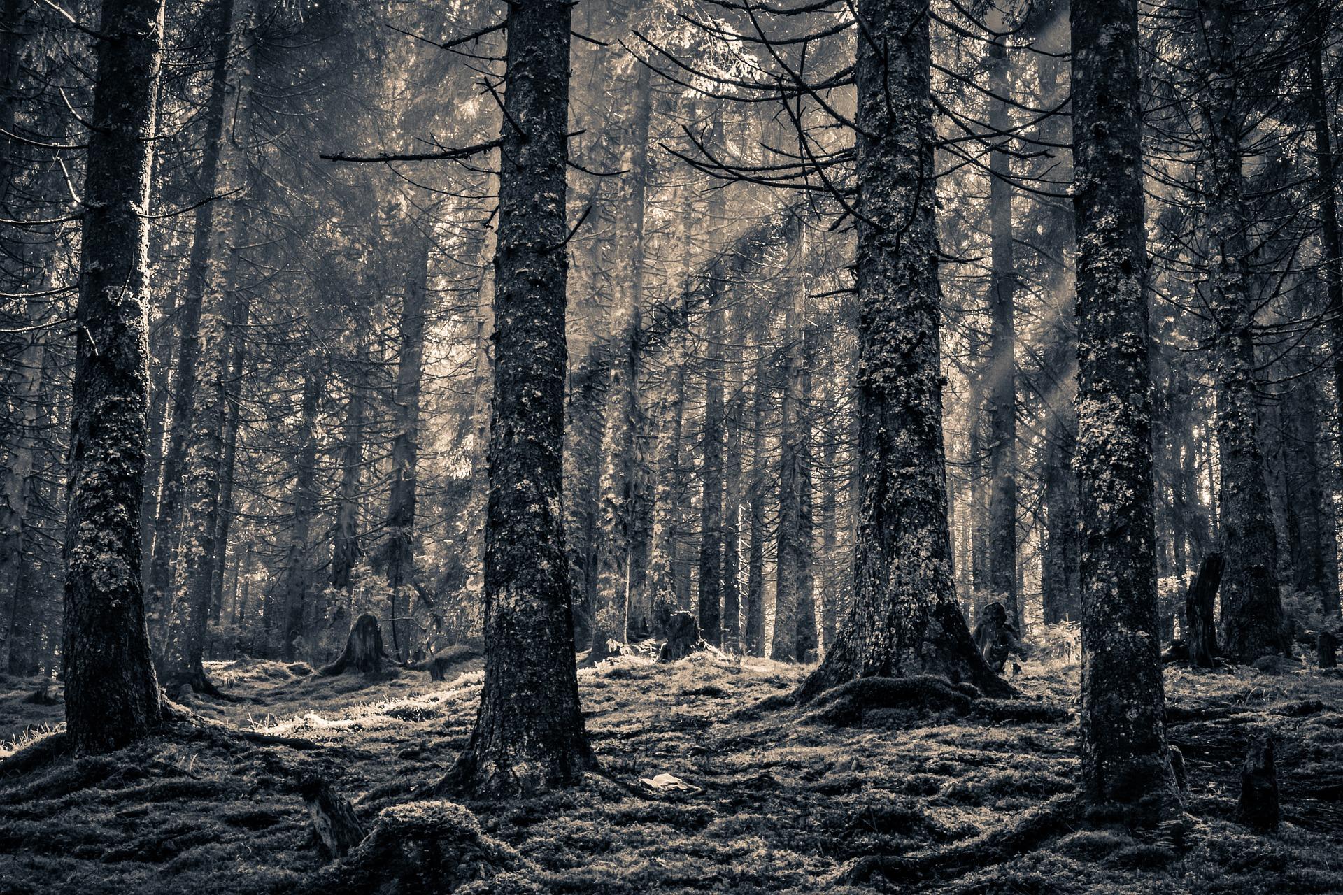 forest-998464_1920.jpg