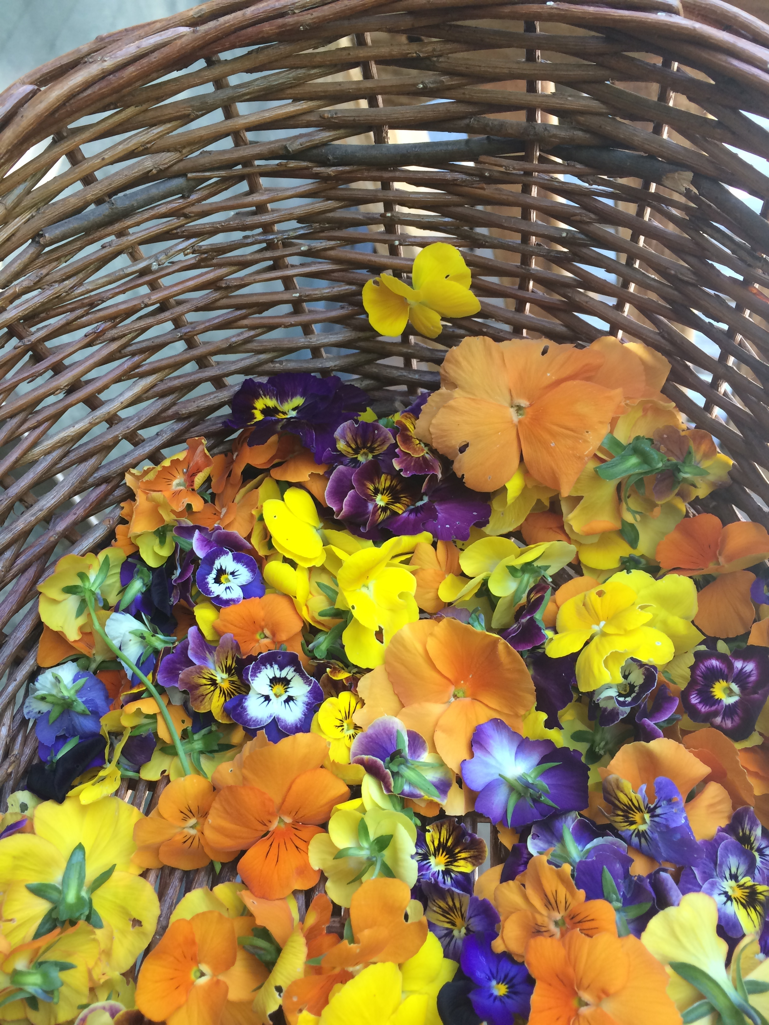Picking pansies for the season