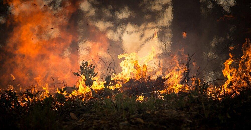 forest-fire-2268729_1280.jpg