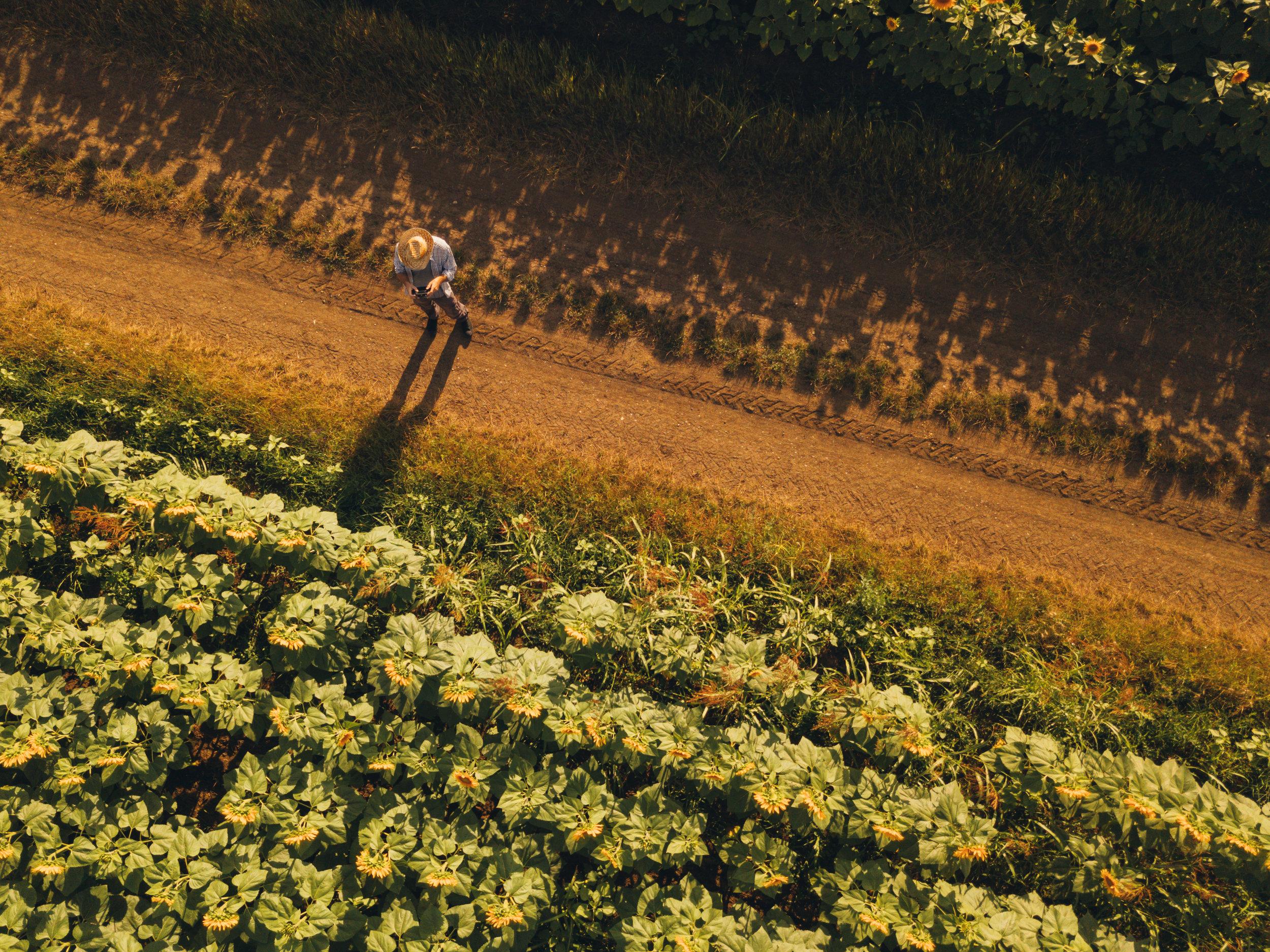 farmer-agronomist-using-drone-to-examine-SAEX2FN.jpg