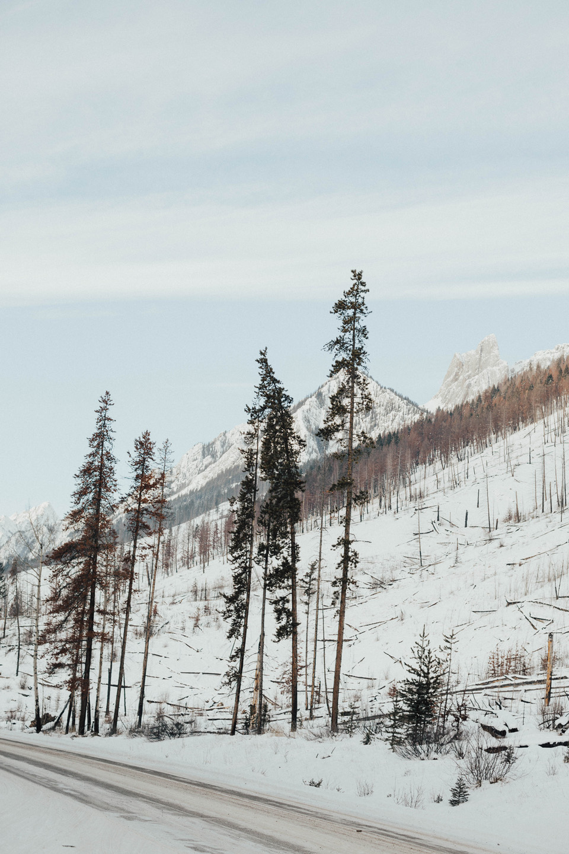 Winter Mountain Bohemain Bridal Inspiration - Michelle Larmand Photography - Banff Wedding Photography -052