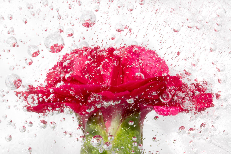 WEB watermark 5772 Red DIanthus1500 px.jpg