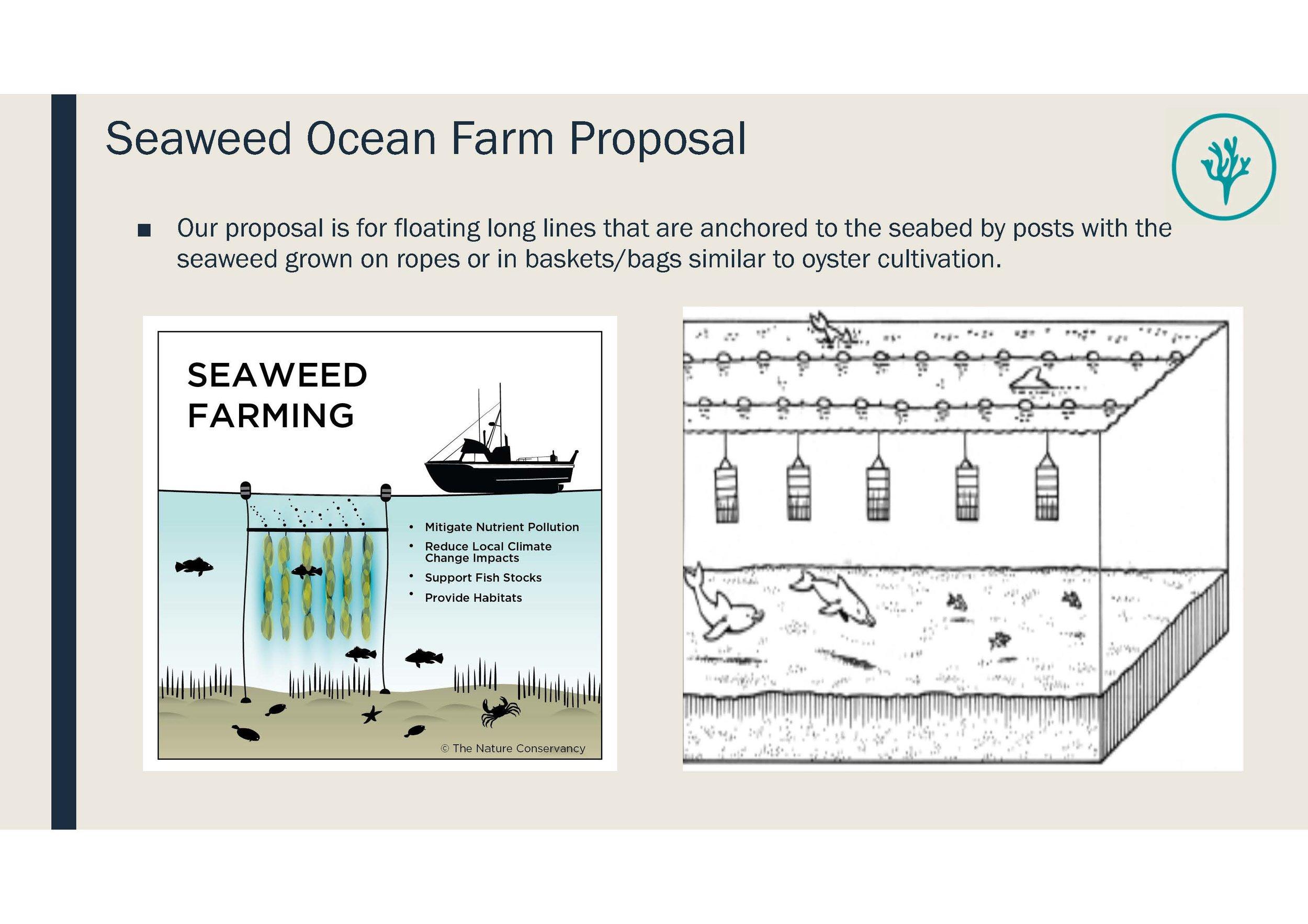 Seaweed Ocean Farm Moreton Bay_Information Pack_Page_06.jpg