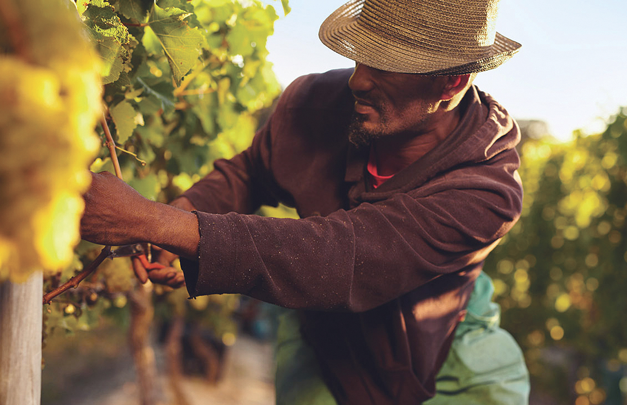 REPORT- Structural Racism Eliminated Black Farmers pic.jpg