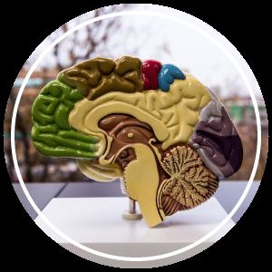 common-ground-psychiatry-dr-brenda-czaban-denver-colorado-10.png
