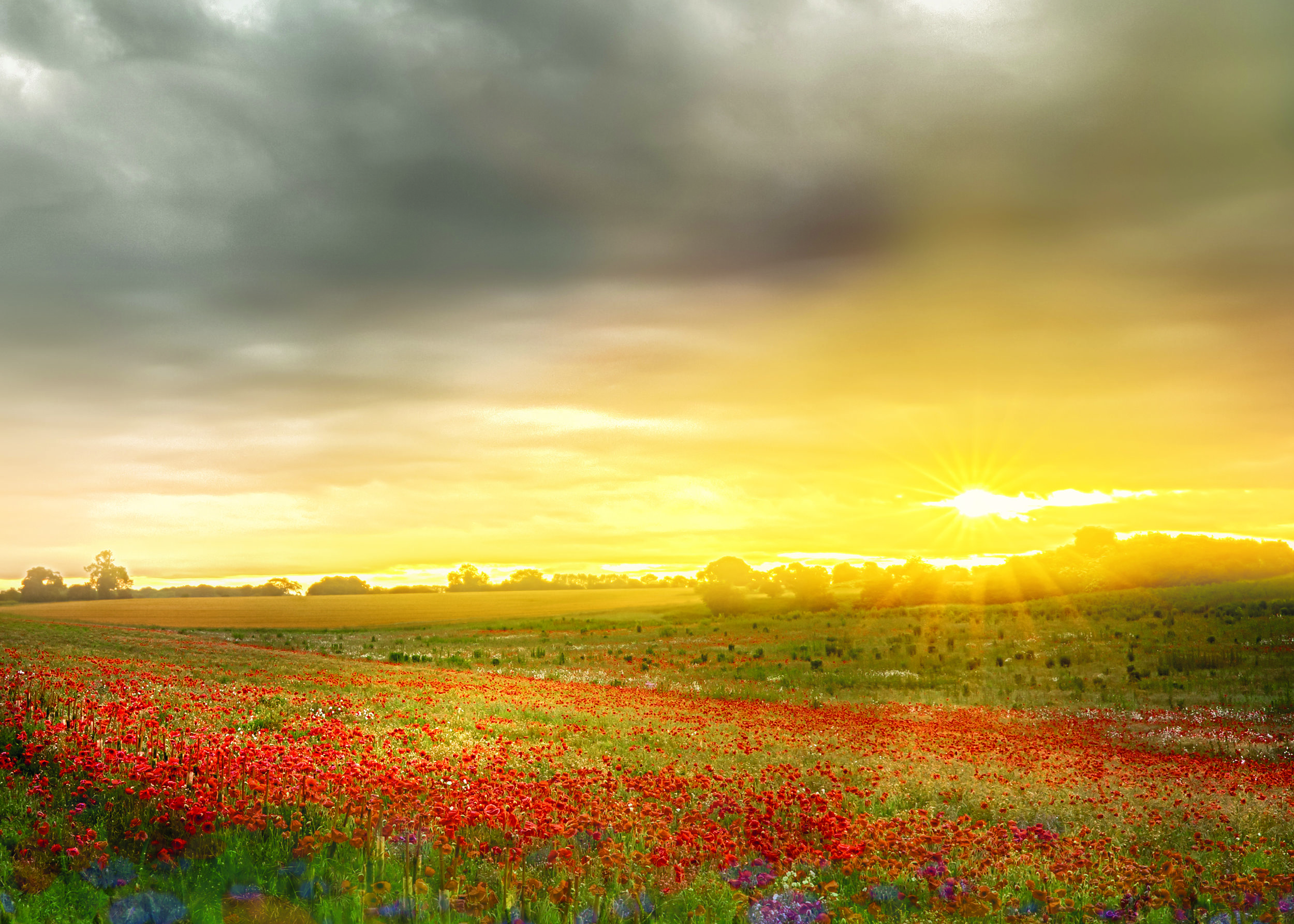 Sky-and-poppies-only.jpg