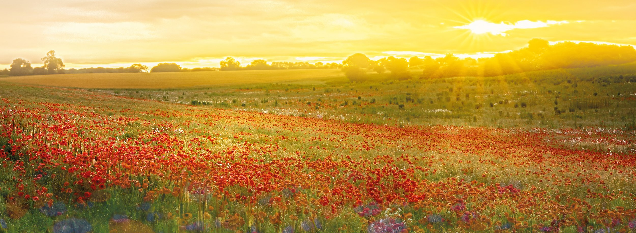 Light-and-poppies-only.jpg