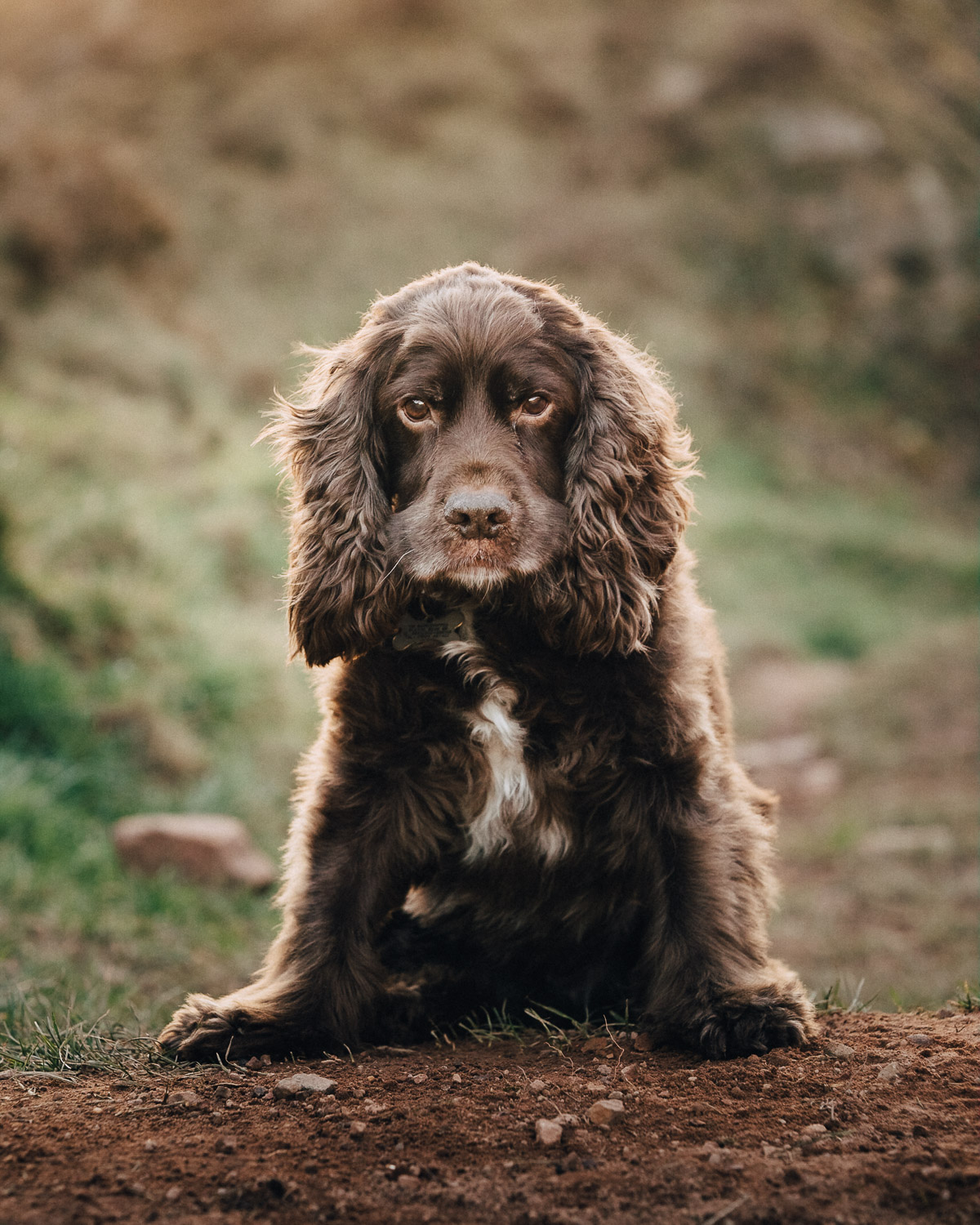 dog-photography-bristol-andrew-maybury-20180225-170753.jpg