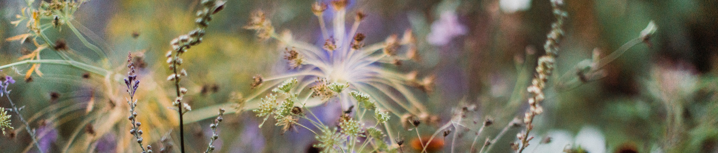 Garden photography for garden professionals and garden media. -